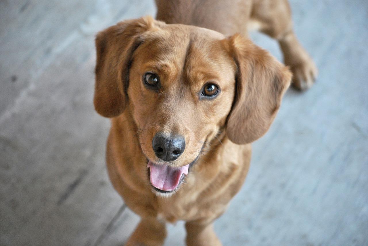 Modne i praktyczne psie akcesoria