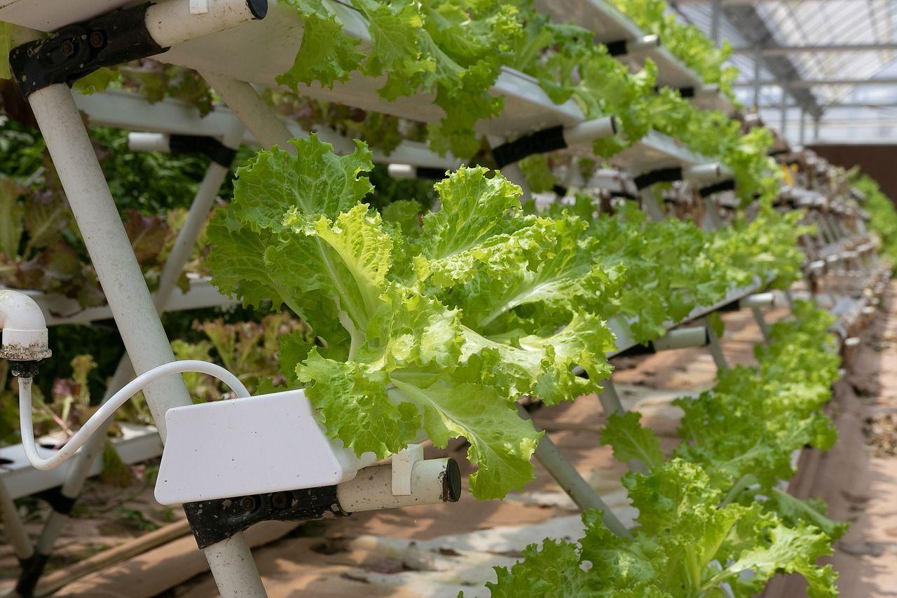 Nowoczesne urządzenia stosowane w ogrodnictwie